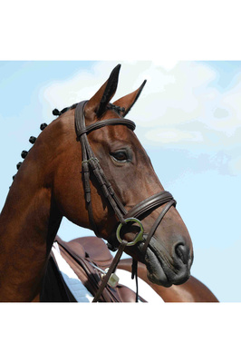 Collegiate Syntovia+ Padded Raised Flash Bridle - Brown